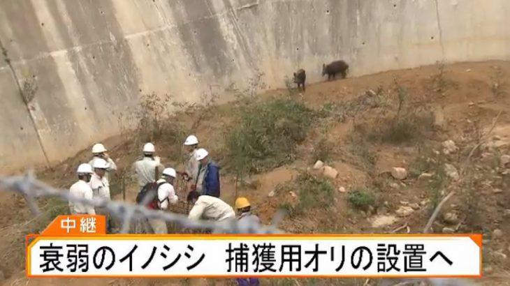 【LIVE】砂防ダム転落イノシシ「捕獲作戦」 罠の檻が完成!救出なるか 現場から生中継