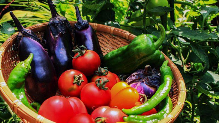 【テレビ】松ちゃんの「果物と野菜の違い」が大絶賛…「マヨネーズかけて食えるのが野菜だ!」
