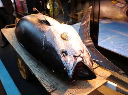 【ご期待】「すしざんまい」が3.3億円で落札した一番マグロ、漁師の取り分は所得税などを差し引いて1.7億円