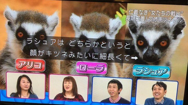 【NHK】「ダーウィンが来た」に芸能人のワイプ使用で「改悪だ」と批判「クソ番組にするなら受信料じゃなくてスポンサー探してくれ」★2