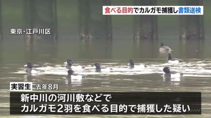 【東京】「日本の食事があわず、粥に入れようと思った」カルガモ2羽を食用に捕獲、捕まえて〇す ベトナム人技能実習生 書類送検★2